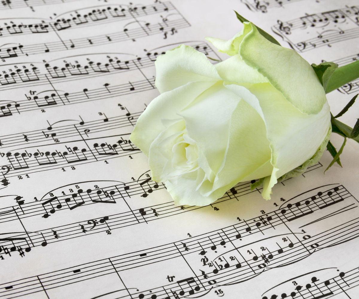 Rose blanche sur une partition