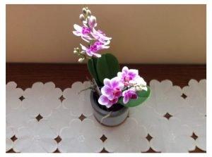 Ma première orchidée